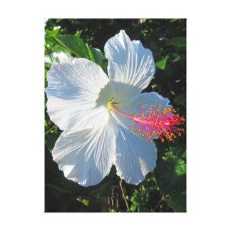 Impressão Em Tela Hibiscus tropical