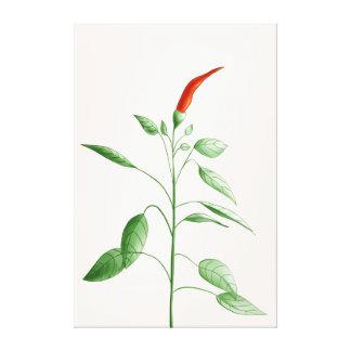 Impressão Em Tela Ilustração botânica da planta da pimenta da