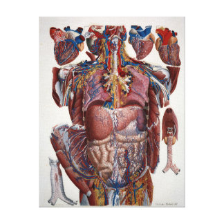 Impressão Em Tela Ilustração de Paolo Mascagni dos Viscera humanos