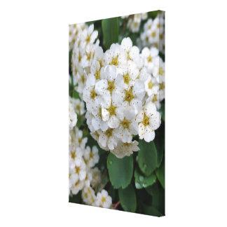 Impressão Em Tela Incandescência das flores brancas