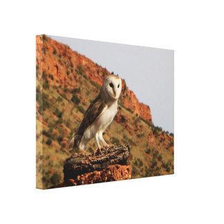 Impressão Em Tela Interior Austrália da coruja de celeiro