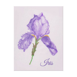 Impressão Em Tela Íris roxa, estilo botânico, arte colorida do lápis