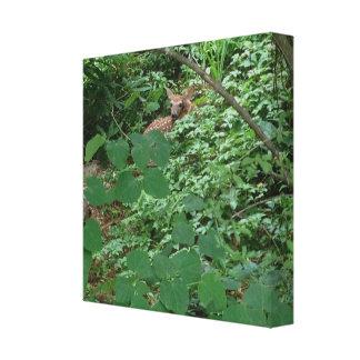 Impressão Em Tela JOVEM CORÇA nas folhas verdes do coração ---