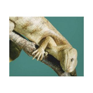 "Impressão Em Tela Lagarto ""feliz "" feliz animal do réptil do lagarto"