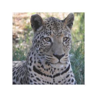 Impressão Em Tela leopardo namibiano majestoso