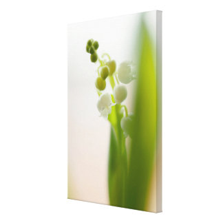Impressão Em Tela Lírio da flor do vale
