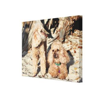 Impressão Em Tela Lixívia - caniches - Romeo Remy
