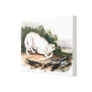 Impressão Em Tela Lobo americano branco por John James Audubon
