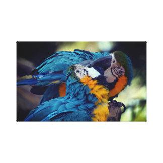 Impressão Em Tela Macaws azuis e amarelos