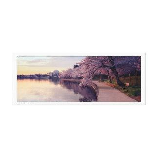 Impressão Em Tela Memorial de Jefferson das flores de cereja