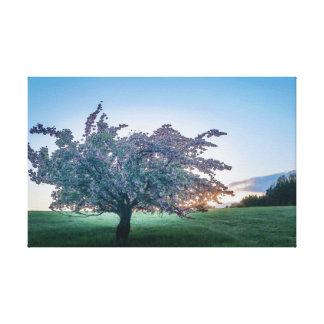 Impressão Em Tela Nascer do sol da primavera, árvore florescida no