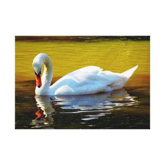 Impressão Em Tela O branco nadou a natação no lago no outono