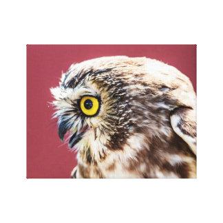 Impressão Em Tela o norte 14x11 Serra-Whet o retrato da coruja