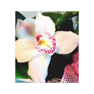 Impressão Em Tela Orquídea branca do Cymbidium