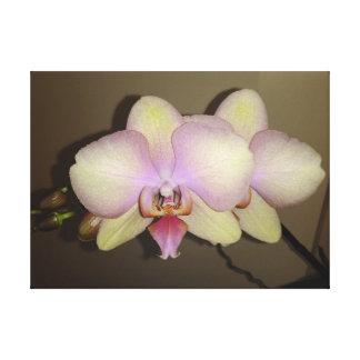 Impressão Em Tela Orquídea cor-de-rosa amarela do Dendrobium do
