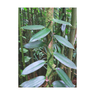 Impressão Em Tela Orquídea de baunilha selvagem