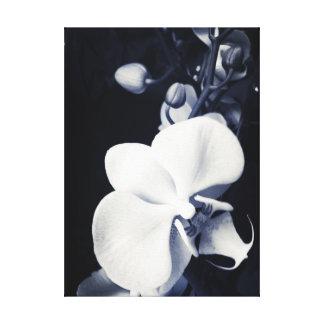Impressão Em Tela Orquídea preto e branco