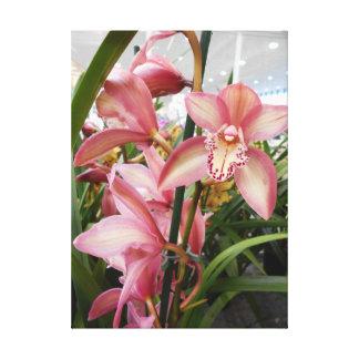 Impressão Em Tela Orquídeas cor-de-rosa do Cymbidium