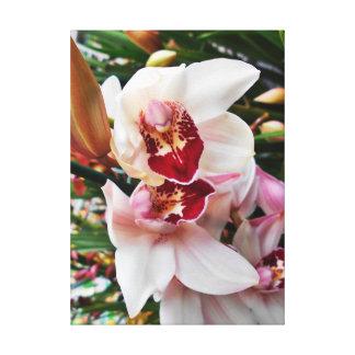 Impressão Em Tela Orquídeas cor-de-rosa do Dendrobium