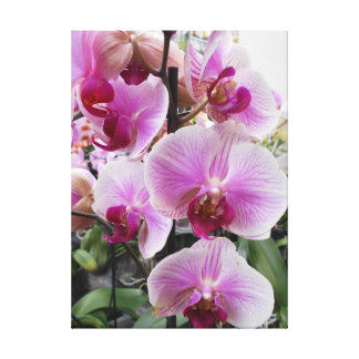 Impressão Em Tela Orquídeas de traça cor-de-rosa