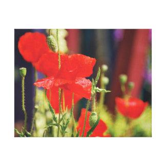 Impressão Em Tela Papoilas bonitas do vermelho da foto do fim-acima