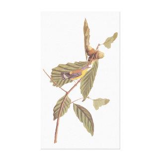 Impressão Em Tela Pássaro da toutinegra da magnólia de Audubon do