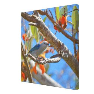 Impressão Em Tela Pássaro de Rican da costela do Tanager das