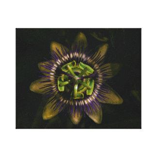 """Impressão Em Tela passiflora 10"""" x8""""/25x20 cm"""