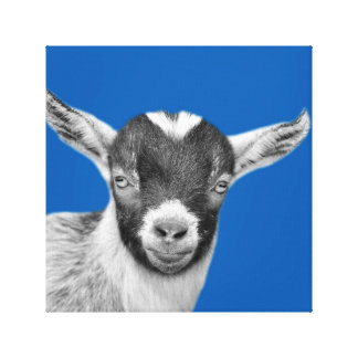 Impressão Em Tela Peekaboo da fazenda animal da cabra preto e branco
