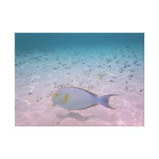 Impressão Em Tela Peixes tropicais do coral da lagoa de Maldives do