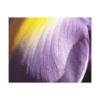 Impressão Em Tela Pétala roxa & amarela da foto bonita do fim-acima