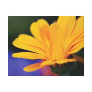 Impressão Em Tela Pétalas alaranjadas da flor da foto bonita do