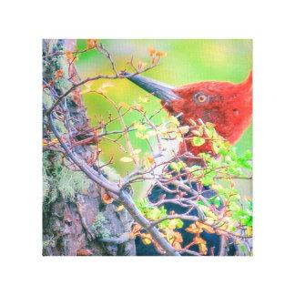 Impressão Em Tela Pica-pau na floresta que Pecking a árvore