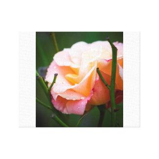Impressão Em Tela Pingos de chuva em um rosa