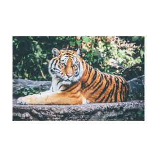 Impressão Em Tela Predador selvagem do gato | do tigre |