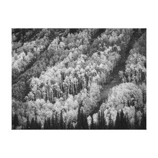 Impressão Em Tela Queda nas Montanhas Rochosas