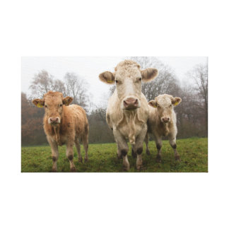Impressão Em Tela Rebanho das vacas no pasto