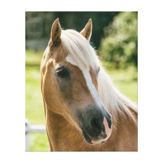 Impressão Em Tela Retrato bonito do cavalo do haflinger