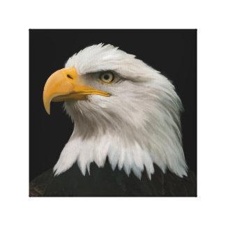 Impressão Em Tela Retrato da águia americana