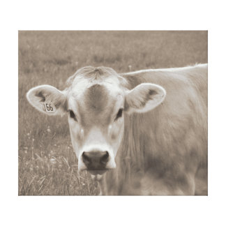 Impressão Em Tela Retrato da vaca do jérsei do Sepia