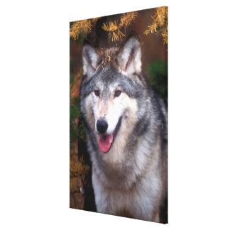 Impressão Em Tela Retrato de um lobo cinzento