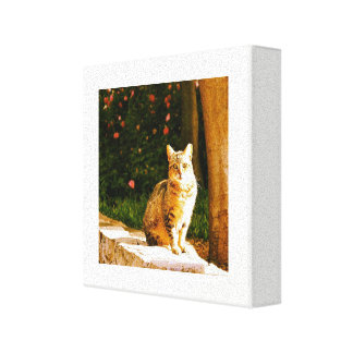 Impressão Em Tela Retrato do gato da rua