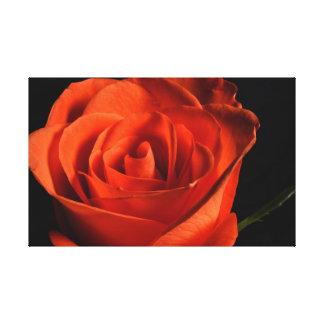 Impressão Em Tela Rosa vermelha bonita no fundo preto