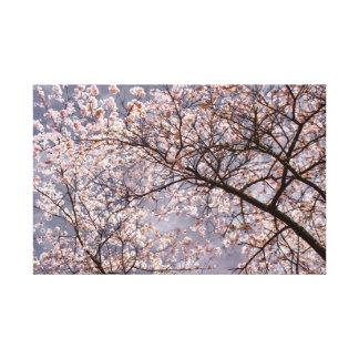 Impressão Em Tela Sakura na flor