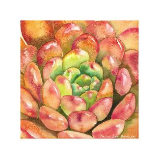 """Impressão Em Tela Sedeveria """"rubi cor-de-rosa"""" por Debra Lee Baldwin"""