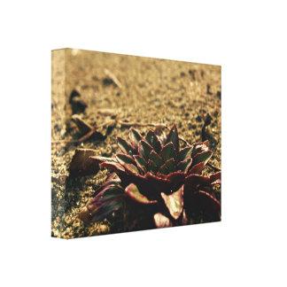 Impressão Em Tela Somente flor na praia