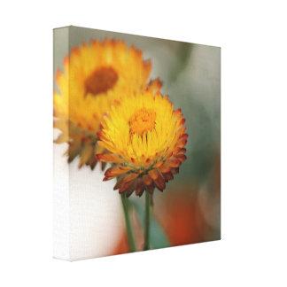 Impressão Em Tela Strawflower dourado
