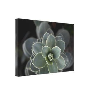 Impressão Em Tela Succulent verde
