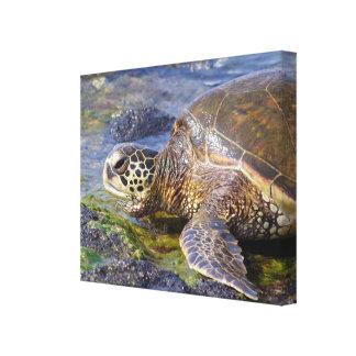 Impressão Em Tela Tartaruga de mar verde havaiana (Honu)