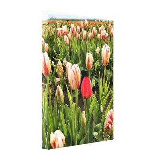 Impressão Em Tela Tulipa cor-de-rosa que está para fora